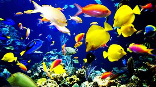 北京双卧5日游>特含海底世界,赠送王府堂会绝技表演