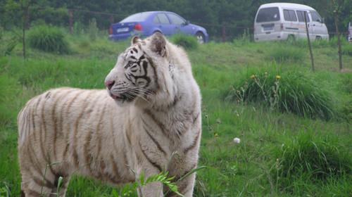 永川乐和乐都娱乐天堂-野生动物园1日游>稻梦空间,孩子的天堂