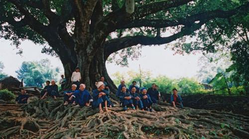 坝美 大榕树下的壮族