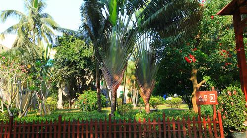 海南农垦万嘉果园热带植物园