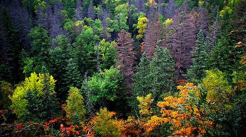 哈尔滨-镜泊湖-长白山-地下森林双飞6日游>0购物,原始丛林穿越