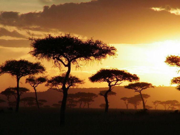 壮观的象群与非洲特有的合欢树让您澎湃的内心带着些许安逸,这无数令
