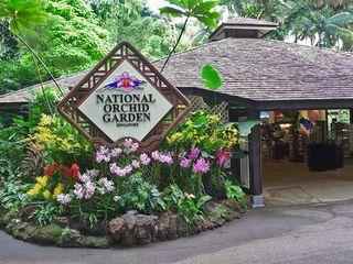 新加坡植物园胡姬花园图片