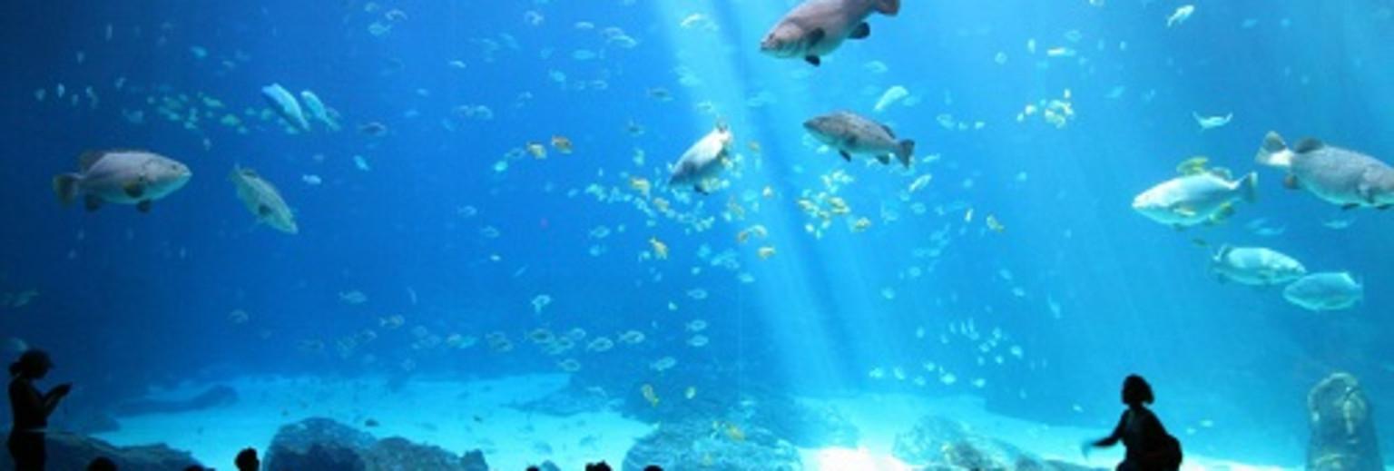 海底总动员|带着萌娃逛遍全球魔力水族馆