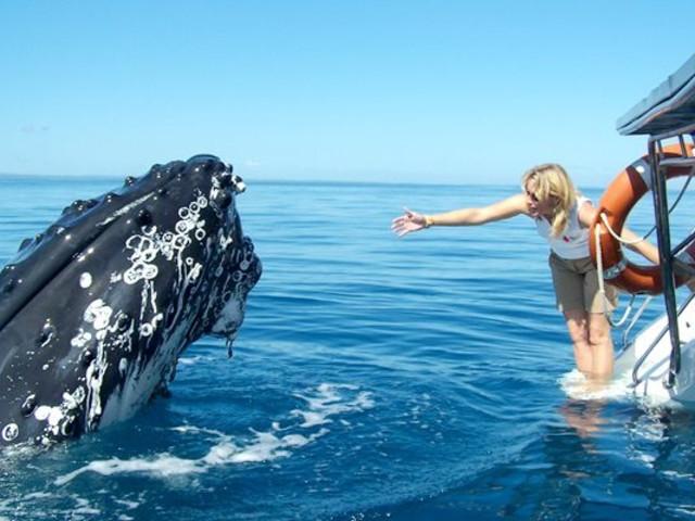 <費沙島四天三晚自然奇觀賞鯨之旅>(3天費沙島住宿+觀鯨+荷維灣出發)