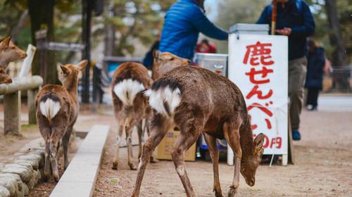 日本大阪-京都-奈良-箱根