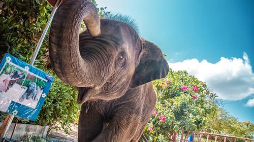 泰国曼谷-芭提雅-苏梅岛机票+本地9或10日游