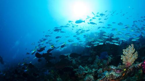 巴厘岛6-8日游