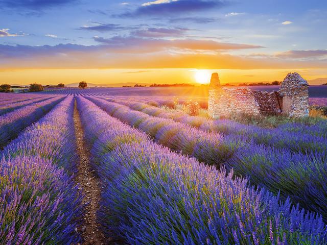 瓦朗索勒|薰衣草染紫的小镇