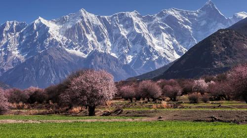 西藏拉萨-林芝-羊湖双卧