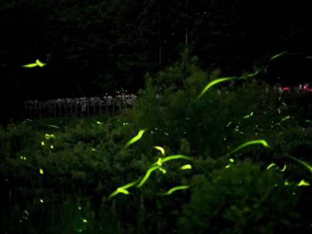 夜晚去紫金山寻觅萤火虫之路