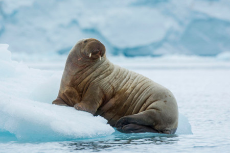 <北極格陵蘭+冰島極光奇遇12天游>香港上海北京三地往返、北極兩島、世界第二大冰蓋、極光