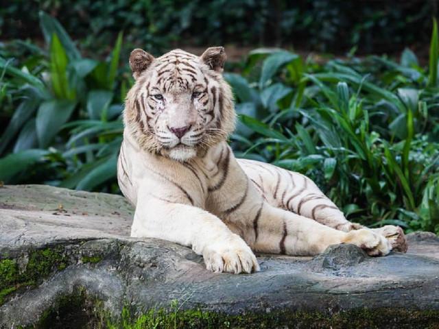 <新加坡三大动物园1日游>与动物亲密接触日间动物园河川生态园园夜间野生动物园(当地参团)