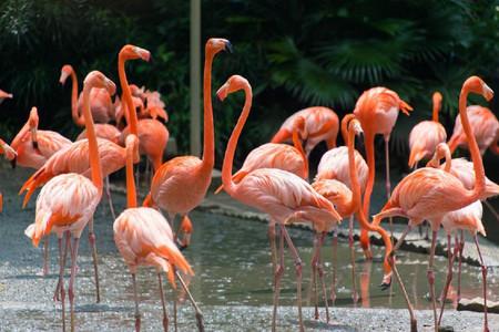 <新加坡动物园亲子1日游>与动物亲密接触可订明日日间动物园夜间野生动物园(当地参团)