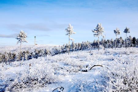 <漠河-北极村-圣诞村双卧4日游>哈尔滨起止打卡中俄边境/漫步北极沙洲/探古朴静逸、赏自然风光、一起寻找北极光/2人起订