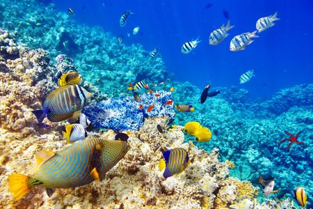 <印尼美娜多5或6日游>直飞,全程无购物,潜水胜地,利广海底断层,布納肯海洋生态保护区,深潜理论课,充分自由活动,含京津接送