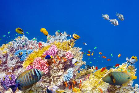 <印尼美娜多5或6日游>天津直飞,世界骨灰级潜水胜地,美娜多市区游,布纳肯海洋生态保护区,利广海底断层,蓝鲸岛,含2个浮潜点