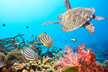 [元旦]<印尼-美娜多机票+当地4或5日游>直飞美娜多,含精美相册,追海豚,布纳肯海洋保护区,含2次浮潜,含潜水教程
