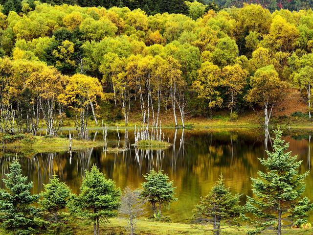 <云南香格里拉普达措国家公园一日游>纯玩无购物,天天发团,体验原始森林公园