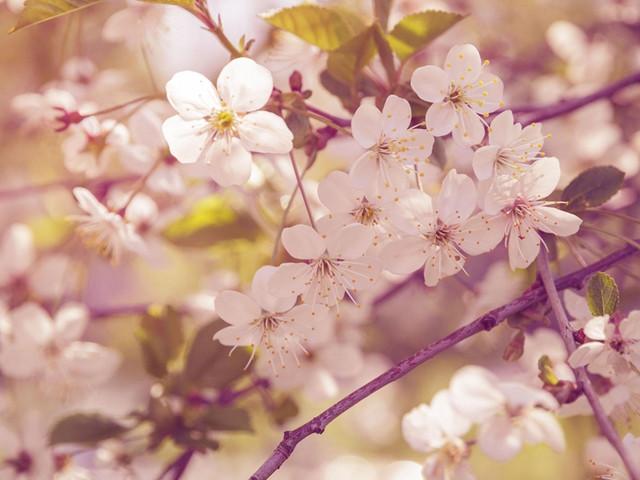 与樱花来场浪漫约会