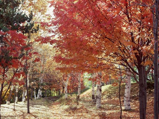 深秋时节赏斑斓红叶