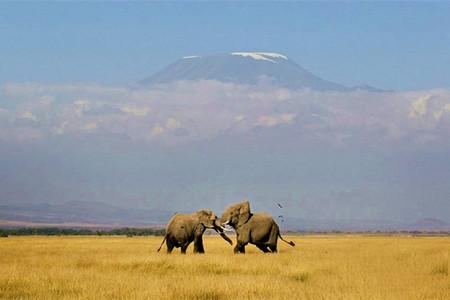 <肯尼亚内罗毕+安博塞利+马赛马拉机票+当地9日游>4人起发,中文私导,5星酒店,陆地巡洋舰游猎,百万动物大迁徙