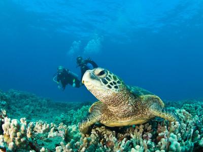 巴厘岛机票+当地5-7日游游