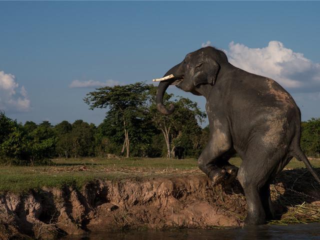 双子大象营地