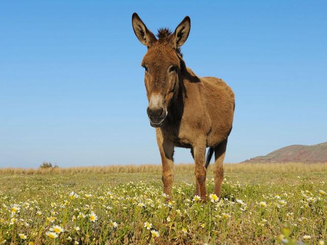 骑着小毛驴走遍费拉