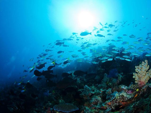 厦门海底世界悠悠然 4日游