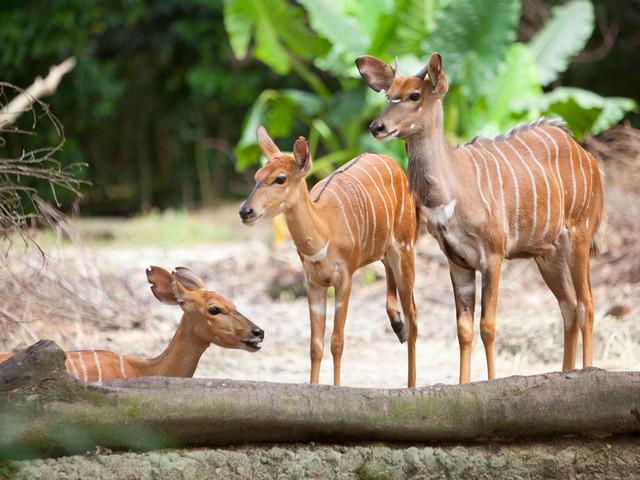 新加坡动物园遇见童真5日游