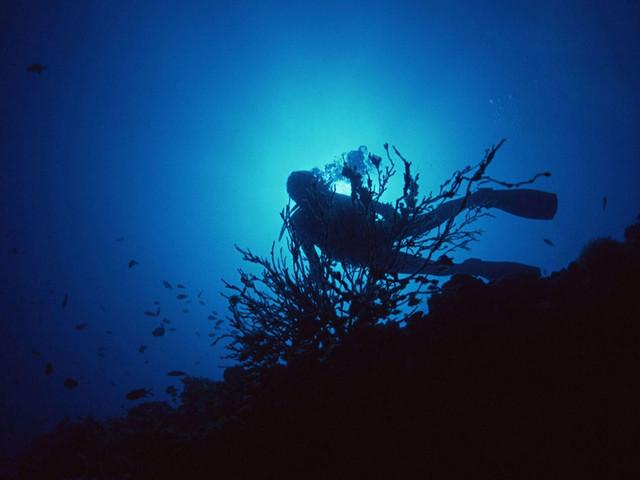 去占婆岛潜水