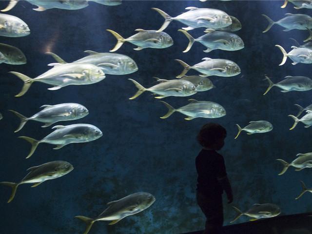 乔治亚水族馆|美国