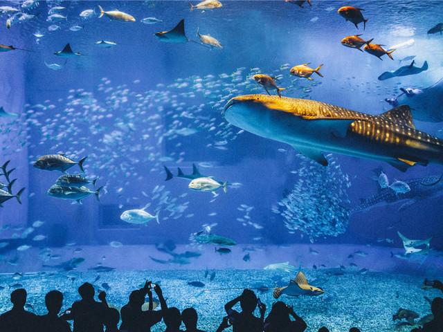 冲绳美之海水族馆|日本