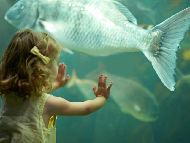 瓦伦西亚海洋水族馆|西班牙
