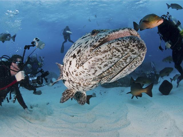 澳大利亚丨大堡礁