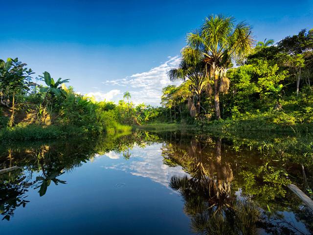 亚马逊雨林