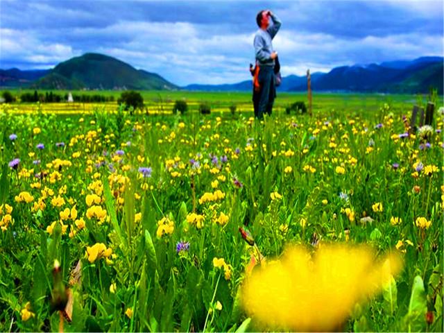 <丽江-香格里拉2日游>0购物,览壮阔虎跳峡,春暖花开,去往心中日月,5A普达措,祈福松赞林寺,蜜月休闲
