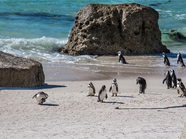 与企鹅合影