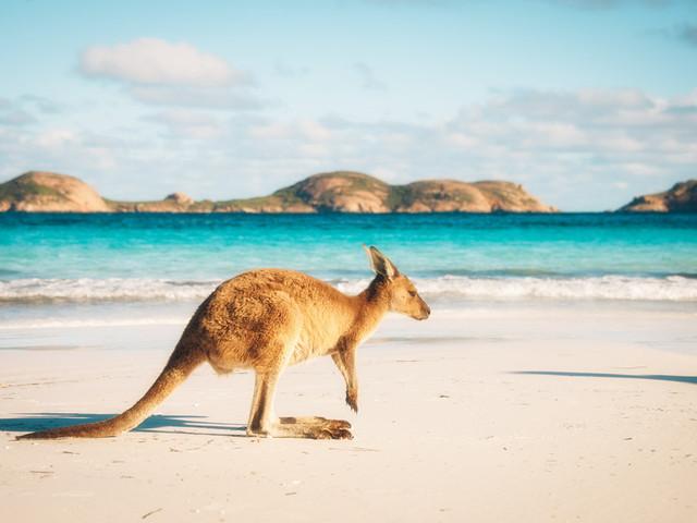 扫盲篇•澳洲(1)
