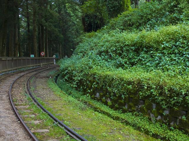 <台湾阿里山国家风景区一日游>森林小火车 高山茶园一日游 天天出发 2人成行