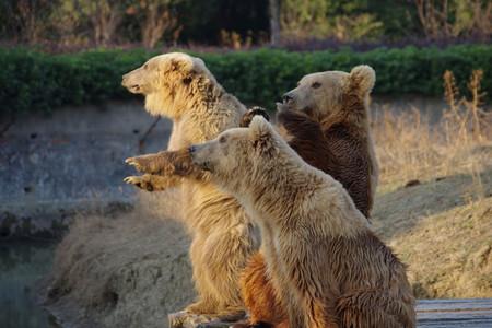 <常州淹城野生动物园1日游>一票暢玩,与动物亲偎,亲子游必选,大马戏表演已含,家人一起游,快乐出行,乐享一日