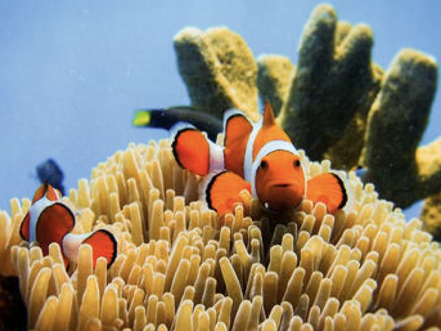 <长滩岛体验潜水>畅游水下世界(中文教练大船 免费高清照片)