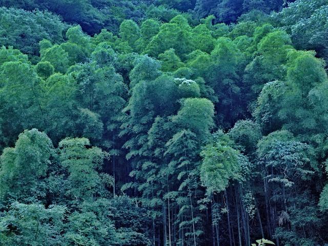 江西阳岭国家森林公园