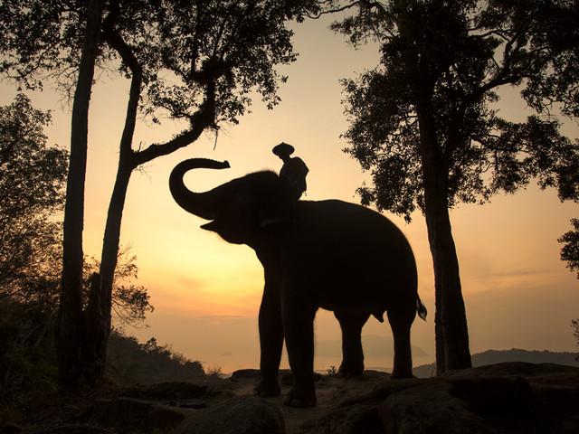 <普吉岛沙发里半日游骑大象 猴子表演 大象洗澡每天2团轻松不累 >小鱼spa 泰拳表演 划独木舟观光红树林 实弹射击 水稻种植 可接急单