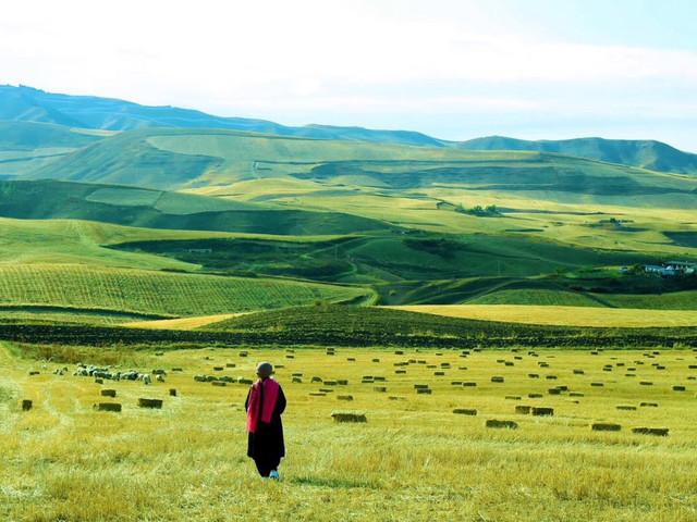 <乌鲁木齐出发南山牧场纯玩1日游>感受草原风光 可升级千回西域演出