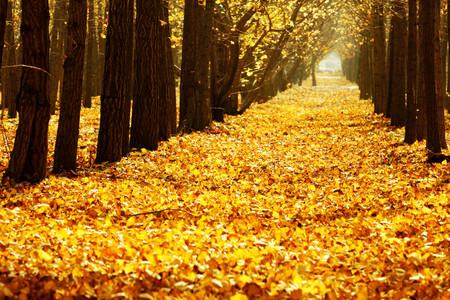 <湖州1日游>长兴八都岕,十里银杏长廊,一睹银杏王千年风姿,畅享金黄的秋天,报名成人可享新鲜银杏果一份,赠完即止
