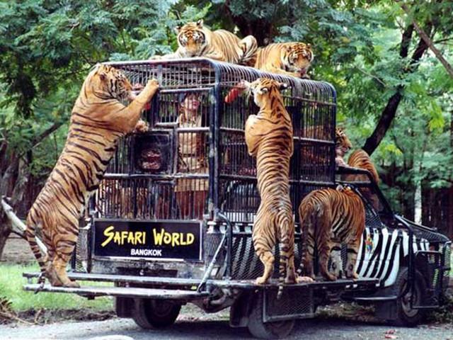 <【曼谷野生動物園 海洋公園門票】>多項可選套餐