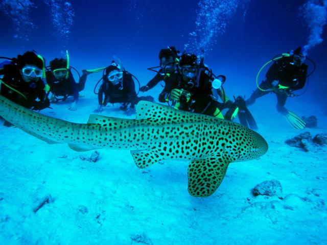 <【普吉島開放水域潛水員培訓課程】>OW/AOW潛水考證培訓課程 專業化教學