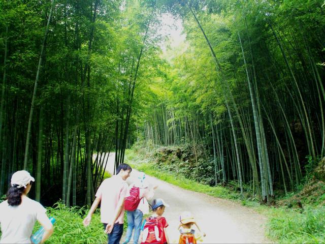 <广州溪头村星溪线一日游>感受醉人竹林+自然新鲜空气+游走山野之间+徒步休闲户外
